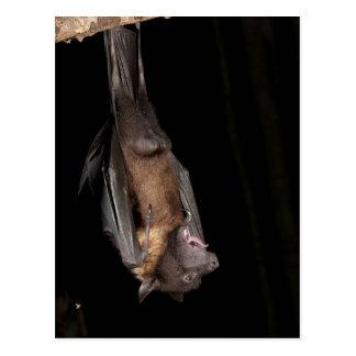 Giant Fruit Bat, Pteropus giganteus, from India Postcard