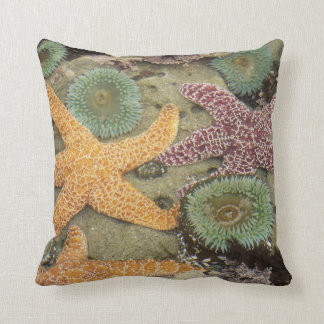 Giant green anemones and ochre sea stars cushion