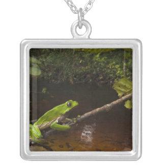 Giant leaf frog Phyllomedusa bicolor) 2 Necklace