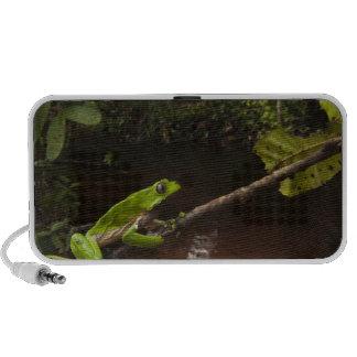 Giant leaf frog Phyllomedusa bicolor) 2 iPhone Speaker