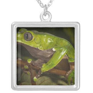 Giant leaf frog Phyllomedusa bicolor) 3 Pendant