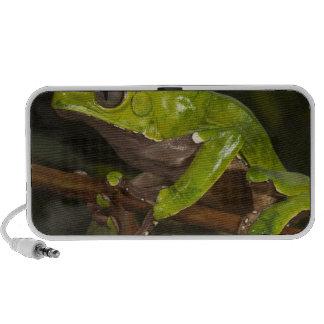 Giant leaf frog Phyllomedusa bicolor) 3 Portable Speakers