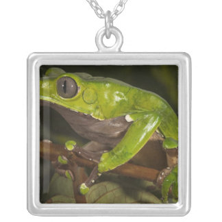 Giant leaf frog Phyllomedusa bicolor) 3 Square Pendant Necklace