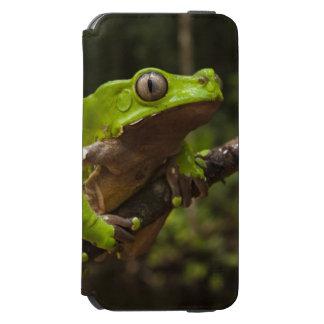Giant leaf frog Phyllomedusa bicolor) Incipio Watson™ iPhone 6 Wallet Case