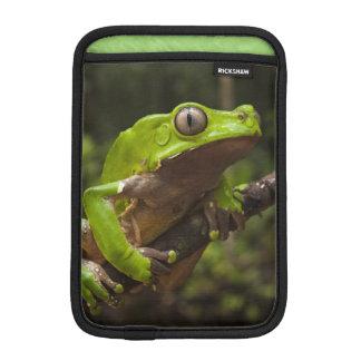 Giant leaf frog Phyllomedusa bicolor) Sleeve For iPad Mini