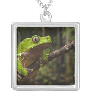 Giant leaf frog Phyllomedusa bicolor) Square Pendant Necklace