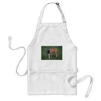 Giant/Lord Derby's Eland-young bull Aprons