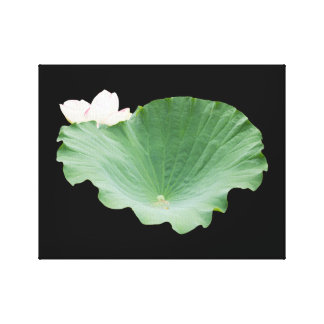 Giant Lotus Leaf with Bloom Stretched Canvas Prints