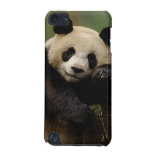 Giant panda Ailuropoda melanoleuca) Family: 4 iPod Touch 5G Case