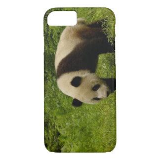 Giant panda (Ailuropoda melanoleuca) in its iPhone 7 Case