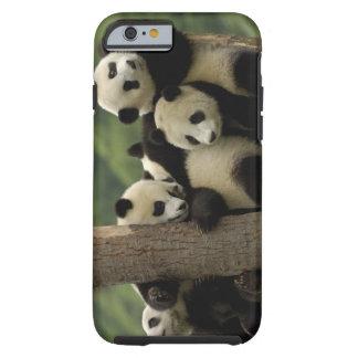 Giant panda babies Ailuropoda melanoleuca) 4 Tough iPhone 6 Case