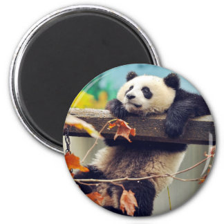 Giant panda baby over the tree 6 cm round magnet