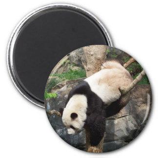Giant Panda Climbing Down Tree 6 Cm Round Magnet