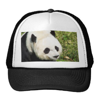 Giant Panda Close Up Portrait Cap
