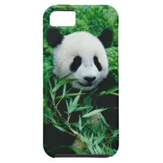 Giant Panda cub eats bamboo in the bush, iPhone 5 Case