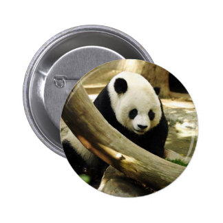 Giant Panda Gao Gao at the San Diego Zoo 6 Cm Round Badge