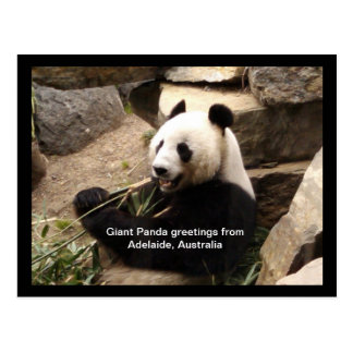 Giant panda greetings card