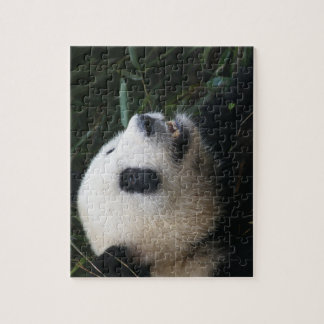 Giant Panda in Bamboo forest Puzzles