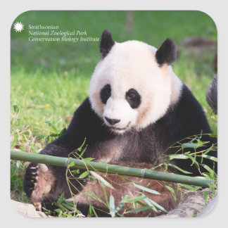 Giant Panda Mei Xiang Square Sticker