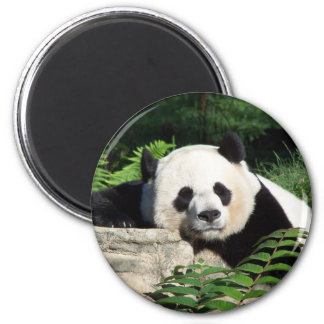 Giant Panda Napping 6 Cm Round Magnet