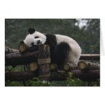 Giant pandas at the Giant Panda Protection & 3 Greeting Card
