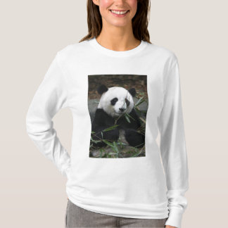 Giant pandas at the Giant Panda Protection & T-Shirt