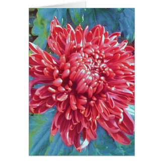 Giant Red Blossom Flower Greeting Note Card