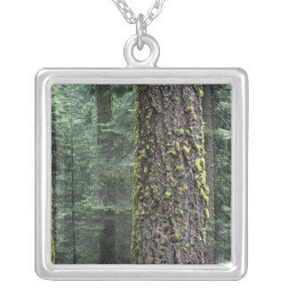 Giant Sequoia trees in the forest, Sequoia and Square Pendant Necklace