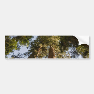 Giant Sequoias in Sequoia National Park Bumper Sticker