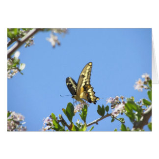 Giant Swallowtail Butterfly Card