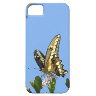 Giant Swallowtail Butterfly iPhone 5 Covers