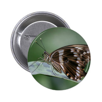 Giant Swallowtail Butterfly Round Pin