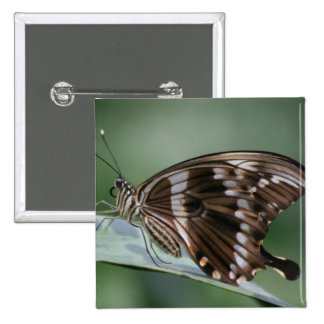 Giant Swallowtail Butterfly Square Button