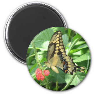 Giant Swallowtail Magnet