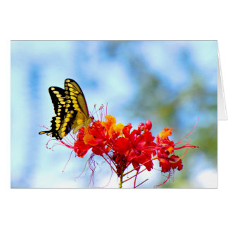 Giant Swallowtail on a Desert Bird of Paradise Card