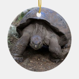 Giant tortoise Galapagos Islands Ceramic Ornament