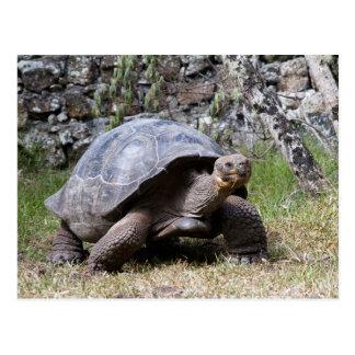 Giant Tortoise | Galapagos Postcard