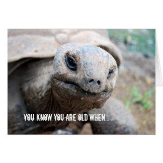Giant Tortoise Memory Lapse Card