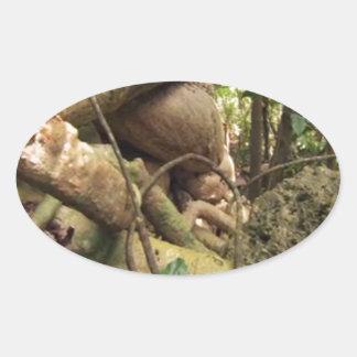 Giant Tree Roots Trip to Zanzibar Island Reefs Fun Oval Sticker