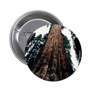 Giant Trees - Sequoia National Park Button