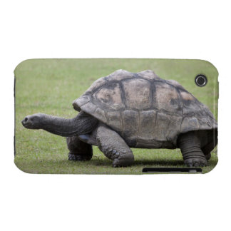 Giant turtle in grass iPhone 3 case