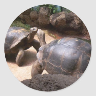 Giant Turtle Kiss Round Sticker