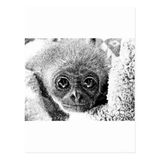 Gibbon Baby Postcard