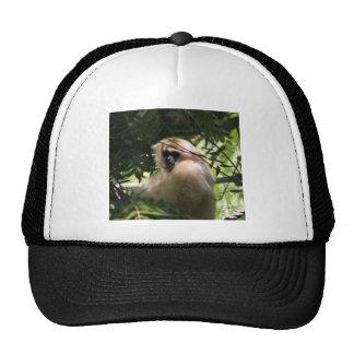 Gibbon Monkey Trucker Hat