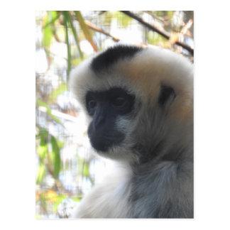 Gibbon Postcard