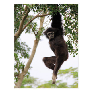 Gibbon Swinging from Tree Postcard