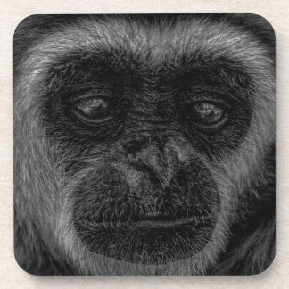 Gibbon wildlife indonesia mammal coaster