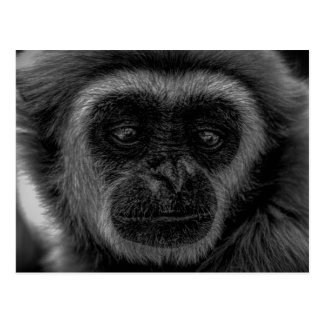 Gibbon wildlife indonesia mammal postcard