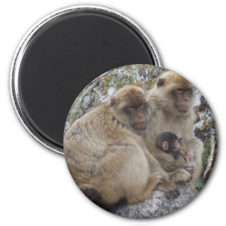 Gibraltar Apes - Magnet