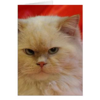 Gift card - Cat print